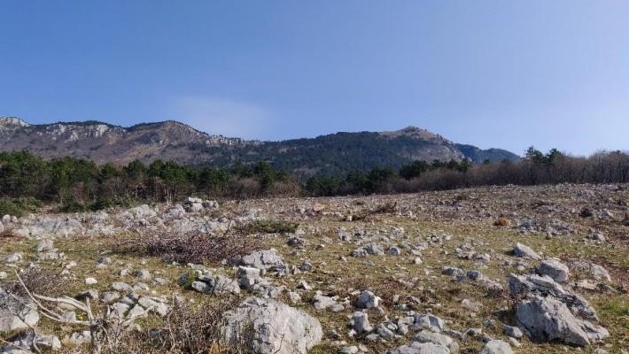 Sečnja za hribskega škrjanca nad Gojačami je v zaključni fazi