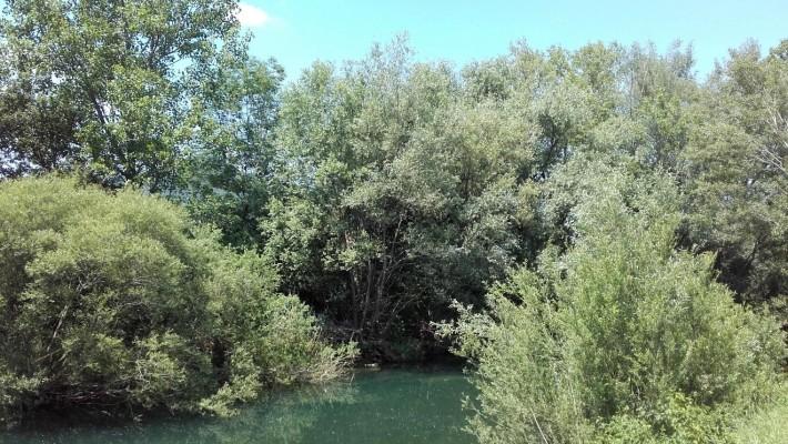 Ohranjanje obrežne vegetacije na Vipavi
